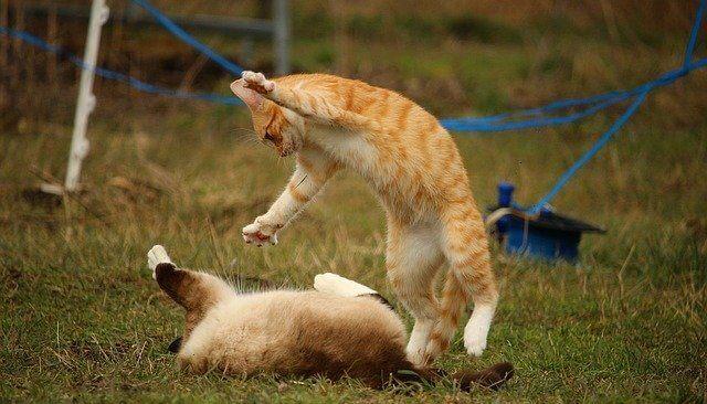 喧嘩している猫